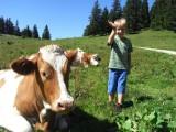 Eine Junge steht neben einer Kuh, die auf der Wiese liegt.