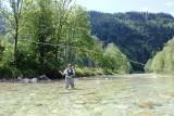 Ein Mann steht in der Ybbs und betreibt Fliegenfischen